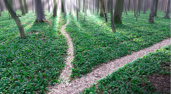forest-trail-fork